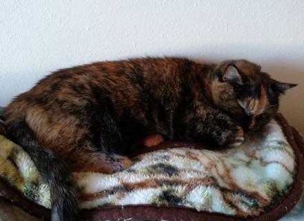 Tortoiseshell cat sleeping on a folded blanket