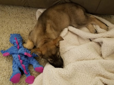 German Shepherd puppy sleeping with a dragon toy and a blanket.