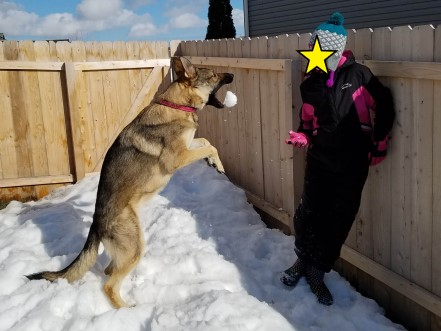 Girl throwing a snowball to a German Shepherd.