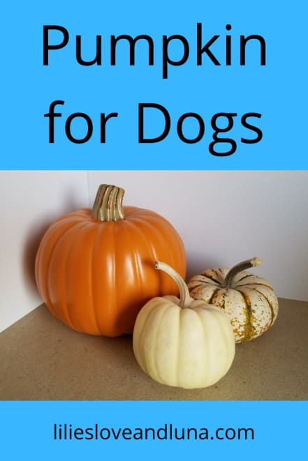 are pumpkins bad for dogs