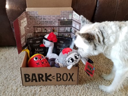 Small white dog sniffing a BarkBox full of dog toys and dog treats.